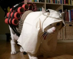 Terrorist Kitty