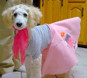 Poodle in a People Skirt!