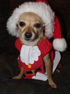 Puppy Claus
