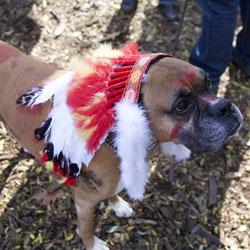 Indian-Dog-Costume